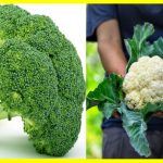 Información Completa Sobre el Brócoli y la Coliflor