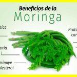 la Moringa – Beneficios y Propiedades para Diabéticos