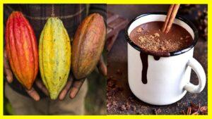 8 beneficios de comer cacao Antes de comenzar aclaremos una cosa, el cacao, no es lo mismo que el chocolate, ya que esto puede prestarse a